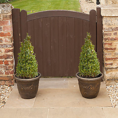 Pair Of Box Topiary   Buxus Sempervirens Pyramid Tall Potted Plants